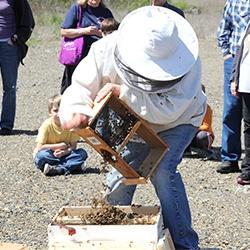 Bee Install Demos