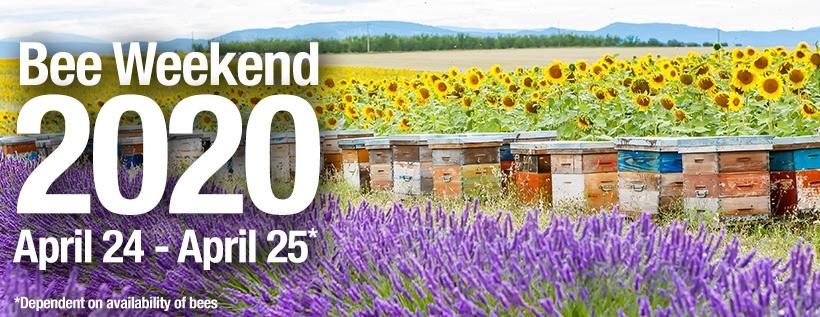 Bee Weekend 2020