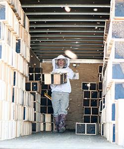 Unloading Bees