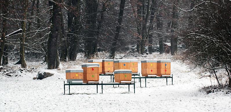 LESSON 14: Wintering the Hive