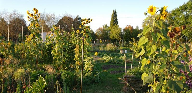 GloryBee Helps Skinner City Farm