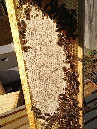 Alan's Bee Chronicles - Inspecting for Honey Harvest