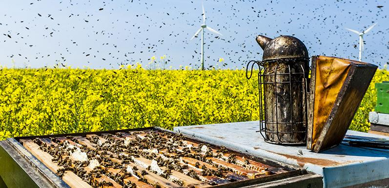 Here Are Some Do's And Don'ts For Beekeeping Beginners