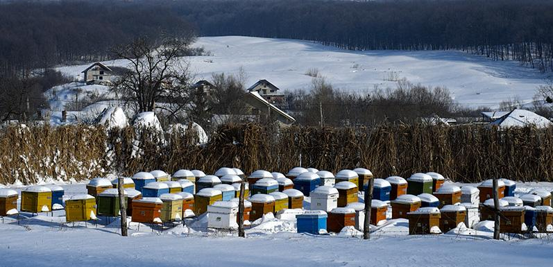 How to Winterize your Hives [Part 3]