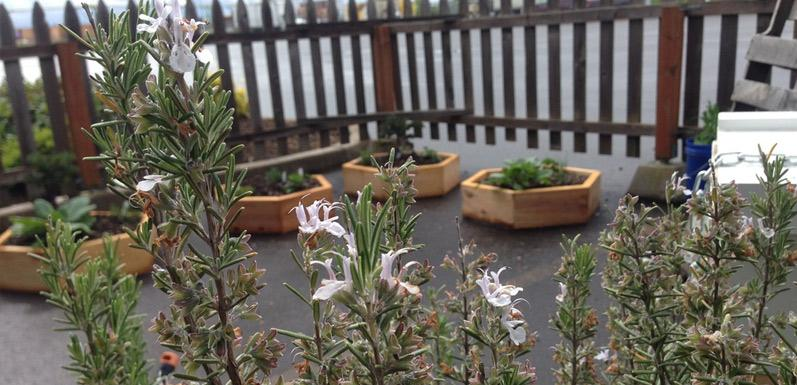 Boxes and Blossoms - Packages of Bees inspire backyard creativity