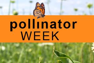 Food Company Sweetens Pollinator Week for Customers and Honey Bees