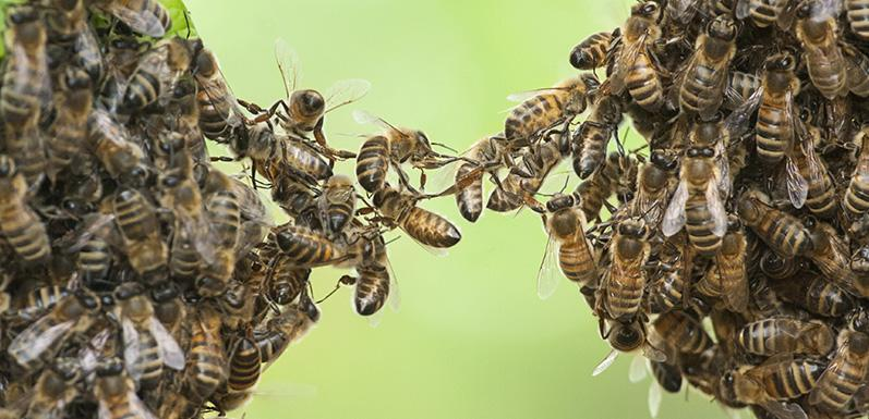 Top 5 Human Occupations for Honey Bees